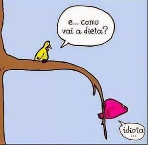 pássaro dieta